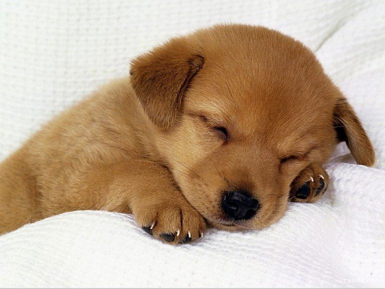 子犬で癒し・ストレス発散